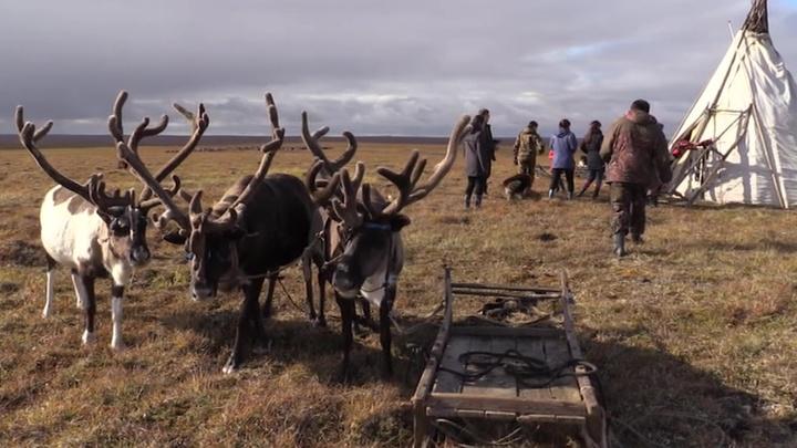 Голод вызовет миграцию на север: эксперт о глобальном потеплении