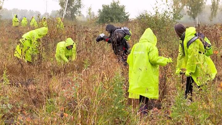 Восстановление сгоревшего в Сибири леса началось с посадки деревьев в Новосибирске