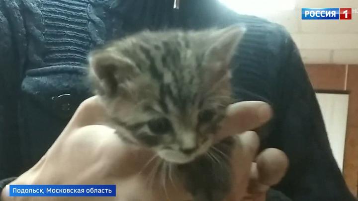 В Подольске котят спасли из шахты вентиляции, разобрав стену