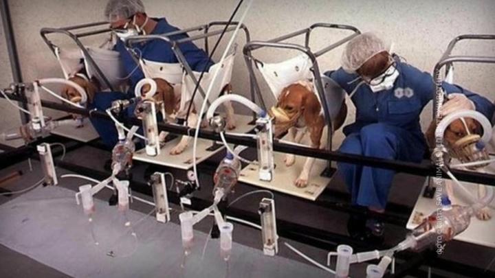 В подпольных лабораториях Европы над животными из России проводят опыты
