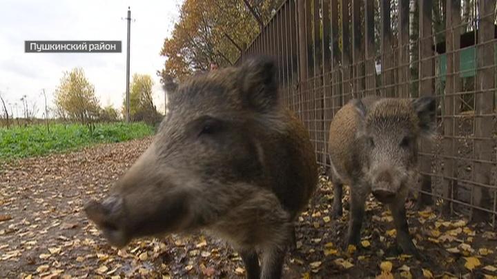 В Москве дикие животные осваивают жилые микрорайоны