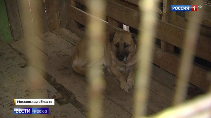 СК начал проверку по факту нападения сторожевых псов на жителей Больших Вязем