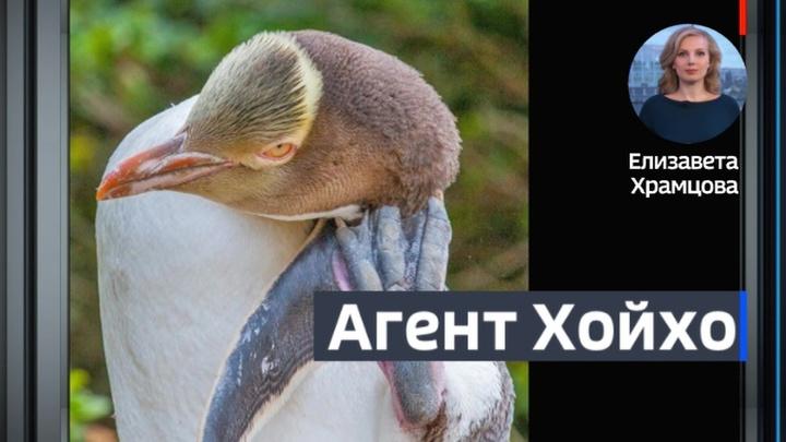 В Новой Зеландии русские хакеры вмешались в выборы птицы года