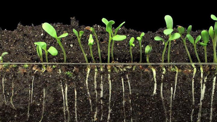 """Программа """"Наука"""": почва для науки"""