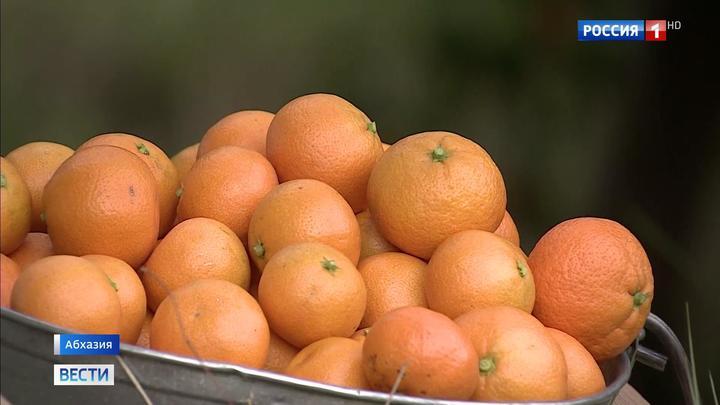 У абхазских мандаринов появится собственный бренд