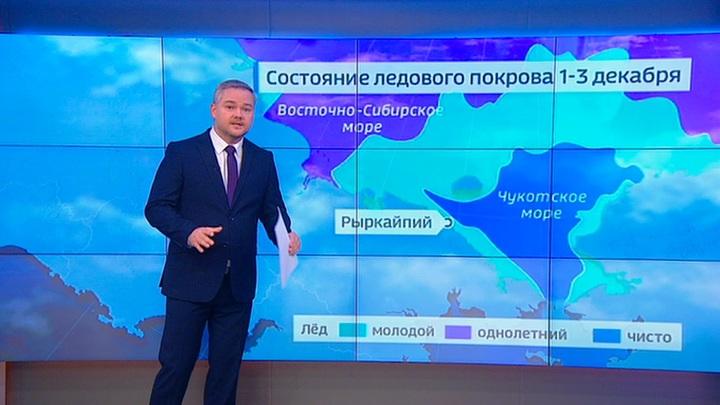 """""""Погода 24"""": белые медведи заполонили Чукотку"""