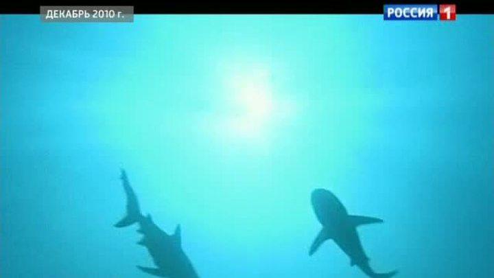 В Калифорнии акула убила человека