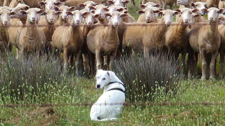 Согласно новым данным, даже нетренированные собаки способны оценить количество представленных объектов.