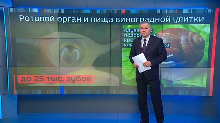 Дискриминация улиток: Путин поручил разобраться с несправедливостью