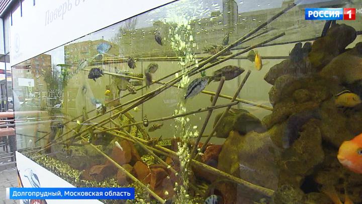 """Аквариум на морозе: жители Долгопрудного возмущены """"камерой пыток"""" для рыб"""