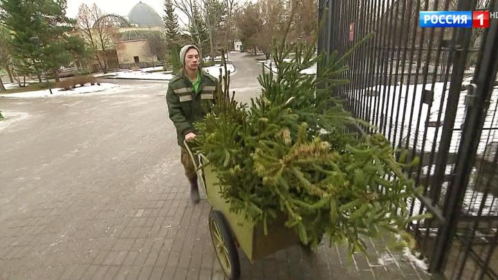 В Москве подсчитали, сколько новогодних елок горожане сдали на переработку