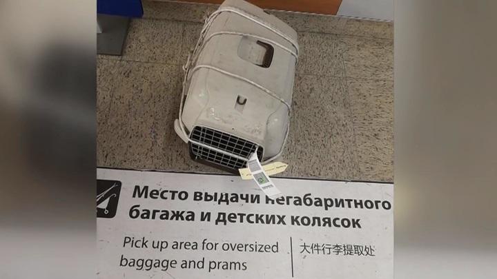 """Смертельный перелет: """"Аэрофлот"""" выясняет, кто разгромил контейнеры с котами"""
