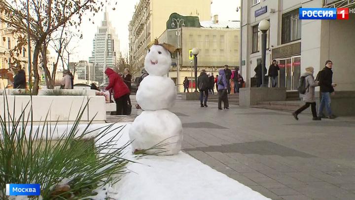 Теплая зима: в столице раньше срока проснулись бабочки и божьи коровки
