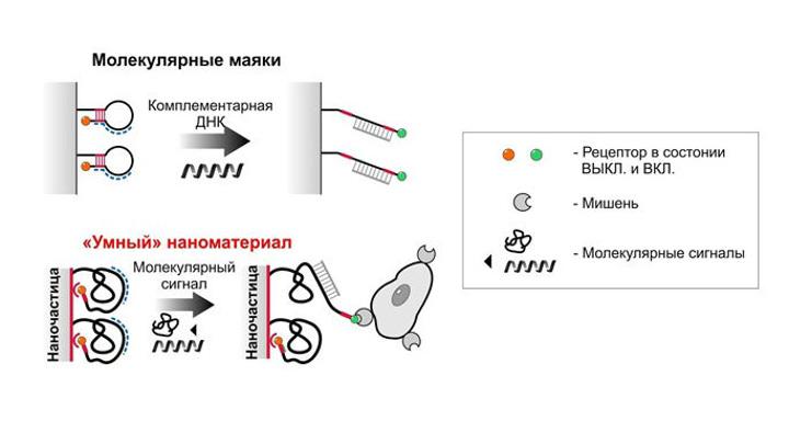 В России созданы сверхчувствительные наноматериалы для ДНК