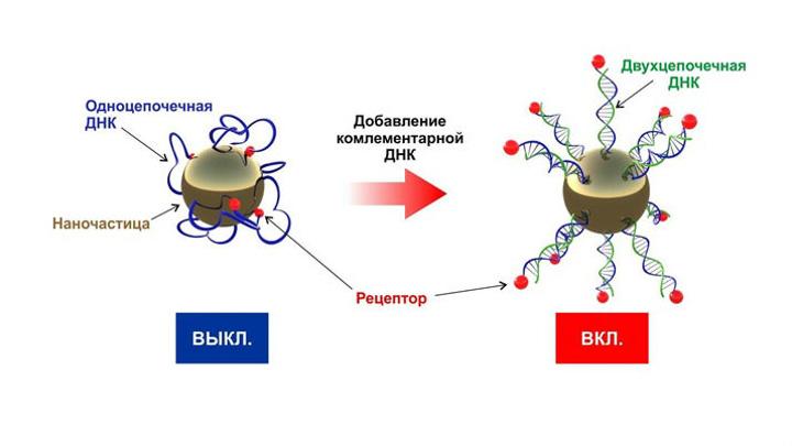 В МФТИ разработали наноматериалы для экспресс-ДНК