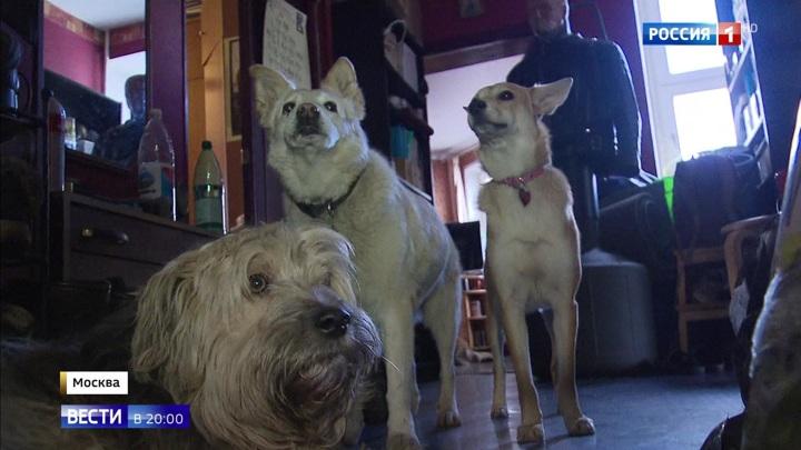24 собаки в одной московской квартире: соседи волонтера не верят в его добрые намерения
