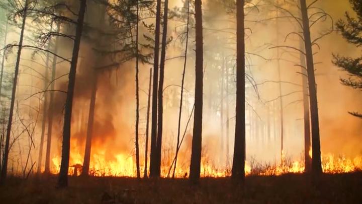 Сезон пожаров может начаться раньше: Авиалесоохрана провела масштабные учения