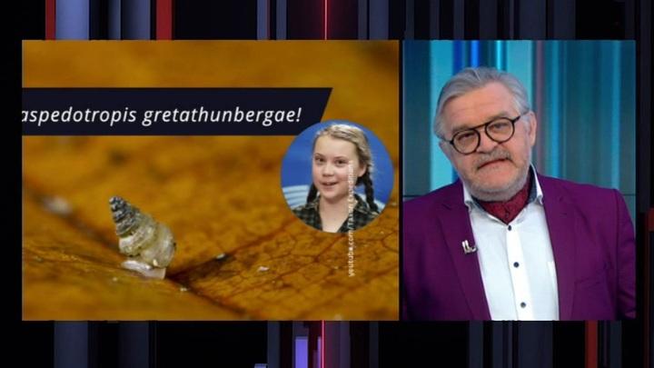Новый вид улиток назвали в честь Греты Тунберг