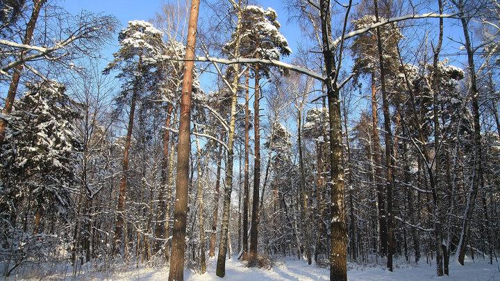 Правительство одобрило проект Стратегии развития лесного комплекса до 2030 года