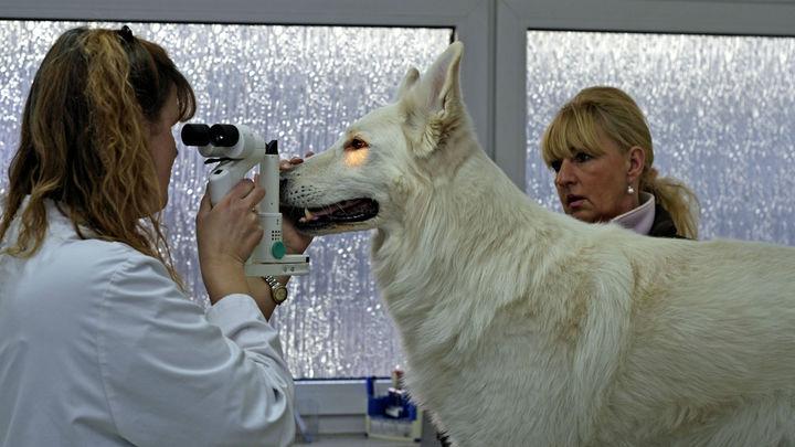 Как животные на самом деле видят мир