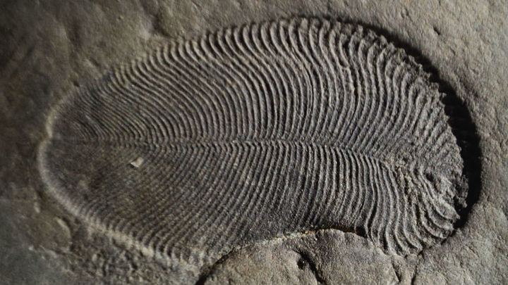 В России найдены древнейшие в мире бесспорные останки животного