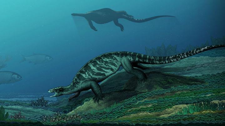 В Китае найдены останки огромной черепахи без панциря