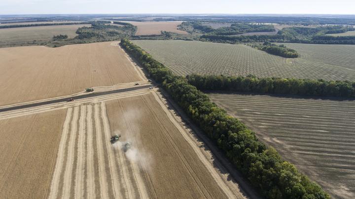 Россия увеличила экспорт сельхозпродукции до $22,4 млрд
