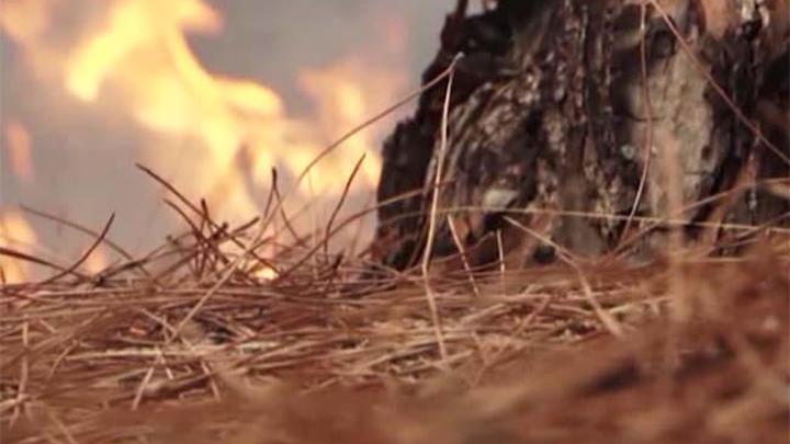 Площадь природных пожаров в Приморье за сутки увеличилась в 10 раз