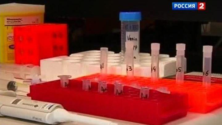 Смертельное обезболивающее: черная мамба помогает врачам