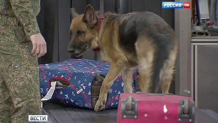Служебная собака в Шереметьево обнаружила незадекларированные деньги