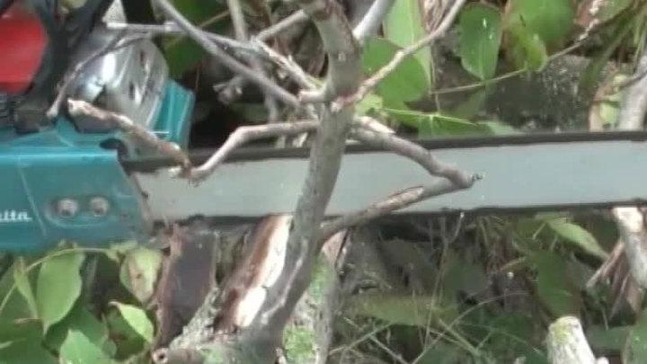 Половина подтопленных на Кубани домов освобождена от воды