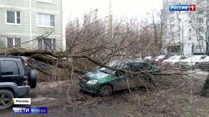 Еще не конец: шторм в Москве утихать не собирается