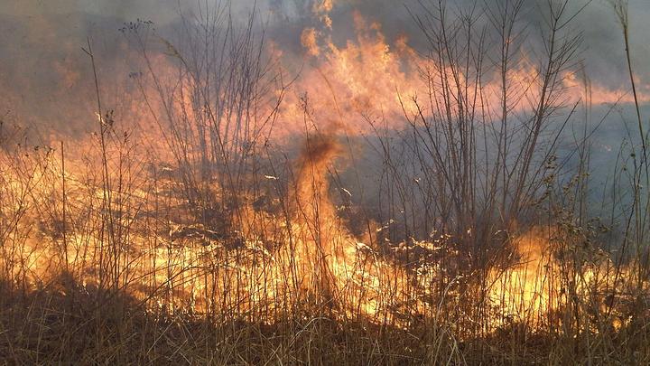 В Татарстане пожар повредил и уничтожил 12 домов в дачном поселке