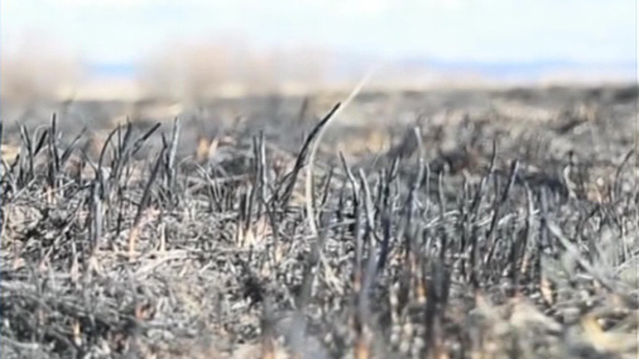 Борьба с лесными пожарами: самая сложная ситуация сложилась в Забайкалье
