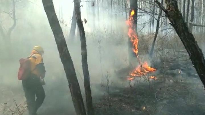На востоке страны набирают силу лесные пожары