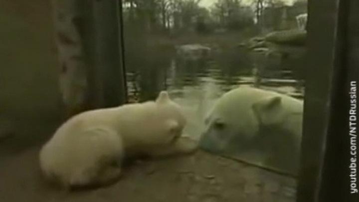 Пандемия ударила по зоопаркам