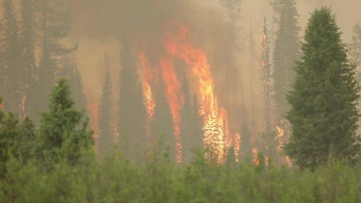 Площадь лесных пожаров в России стремительно растет