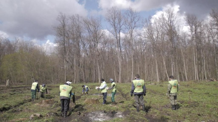 Более 8 тысяч деревьев в память о погибших советских воинах высадили в Башкирии