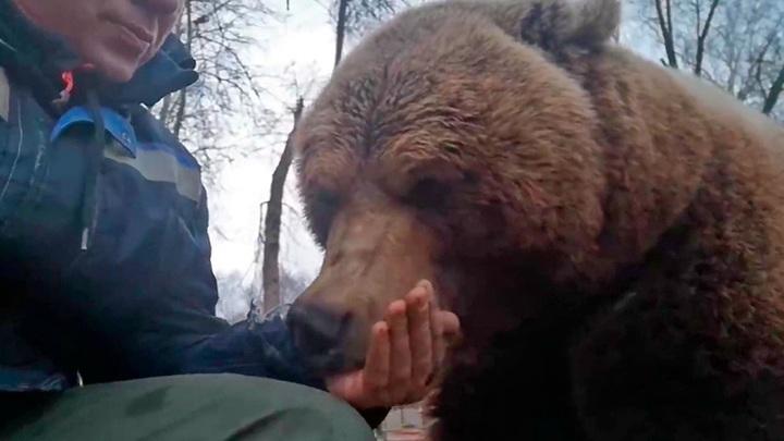 Спячка отменяется. Популярному в Интернете медведю Мансуру исполнилось 5 лет