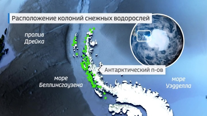 """Погода 24"": Антарктида зазеленела из-за аномального тепла"