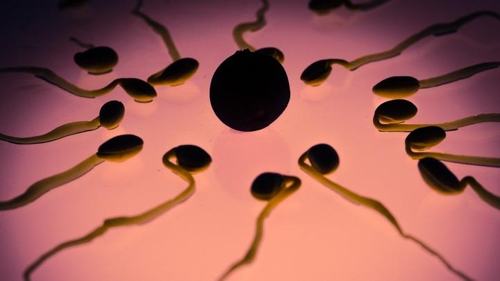 """Сенсационное открытие: яйцеклетка человека сама выбирает себе """"мужчин"""""""