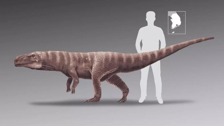 По длине ног найденная в Южной Корее рептилия могла соперничать с человеком.