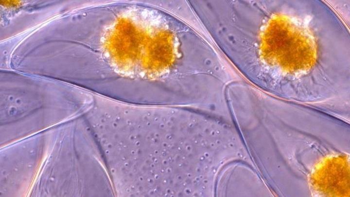 Художественное изображение светящихся микроорганизмов (показаны оранжевым) в потоках морской воды.