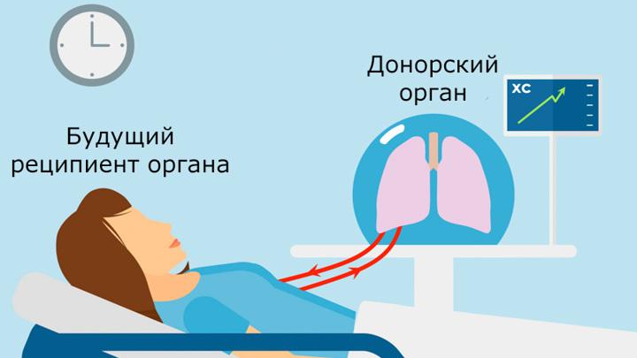 В будущем перекрёстное кровоснабжение позволит спасти множество жизней. Перевод Вести.Ru.