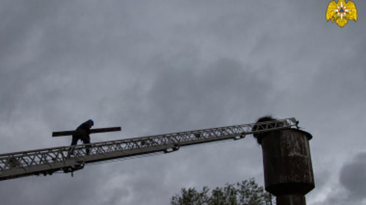 Спасатели вместе с пожарными Ржева помогли трем аистятам вернуться в гнездо