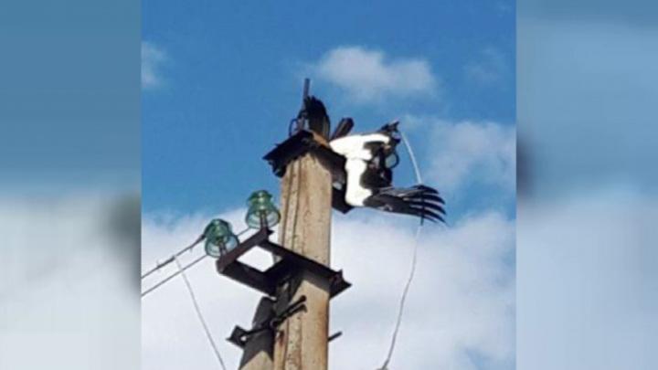 Энергетики сняли с проводов на хуторе в Воронежской области погибшего аистенка
