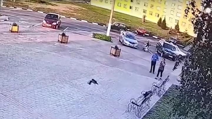 Ворона стащила украденные деньги и попала на видео