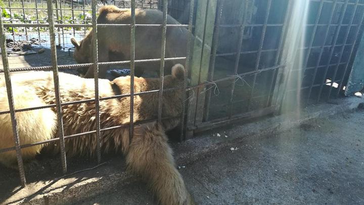"""""""Медведи могли напасть изстраха"""": Запашный о трагедии с ребенком в Сочи"""