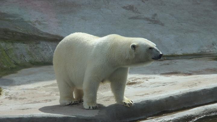 Уже через 15 лет живой мир Арктики может быть разрушен потеплением.