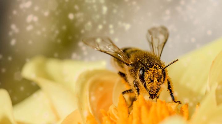 """Жительница Приморья повстречала в лесу """"неправильных пчел"""""""